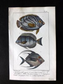Lacepede & Oudart C1830 Hand Col Fish Print. Chaetodon 99
